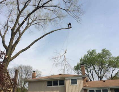 Cutting Off Dead Branches