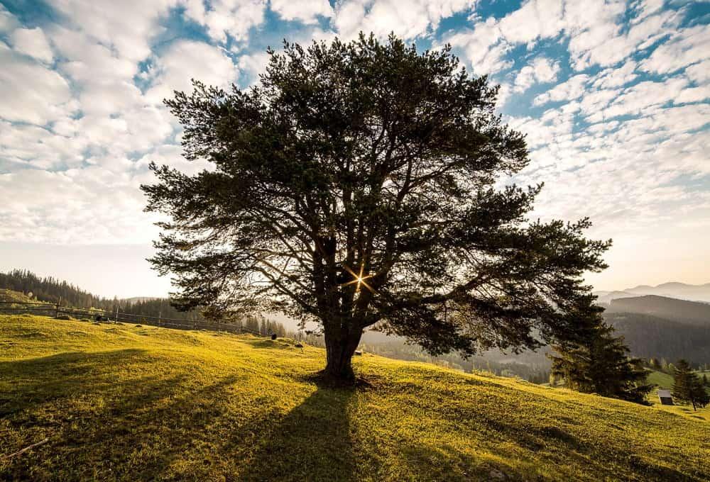 Oak Tree Care