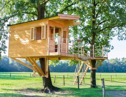 Tree House In Oak Trees