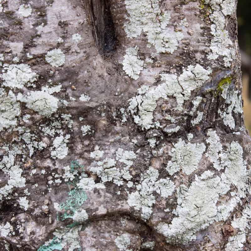 tree fungus disease