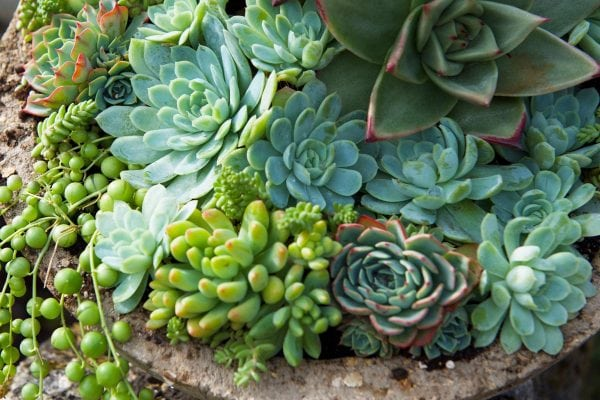 Stone Pot Succulents 2