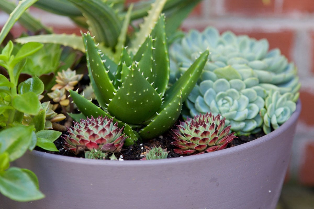 Brick Succulent Pot 2