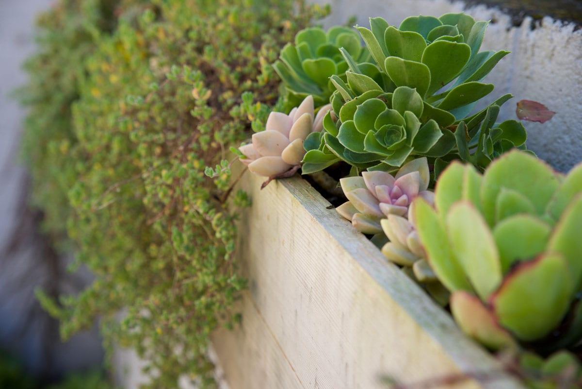 Trailing Succulents 2