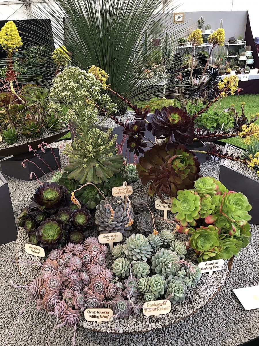 Malvern RHS 2019 01 - Malvern Spring show 9th till 12th of May 2019!
