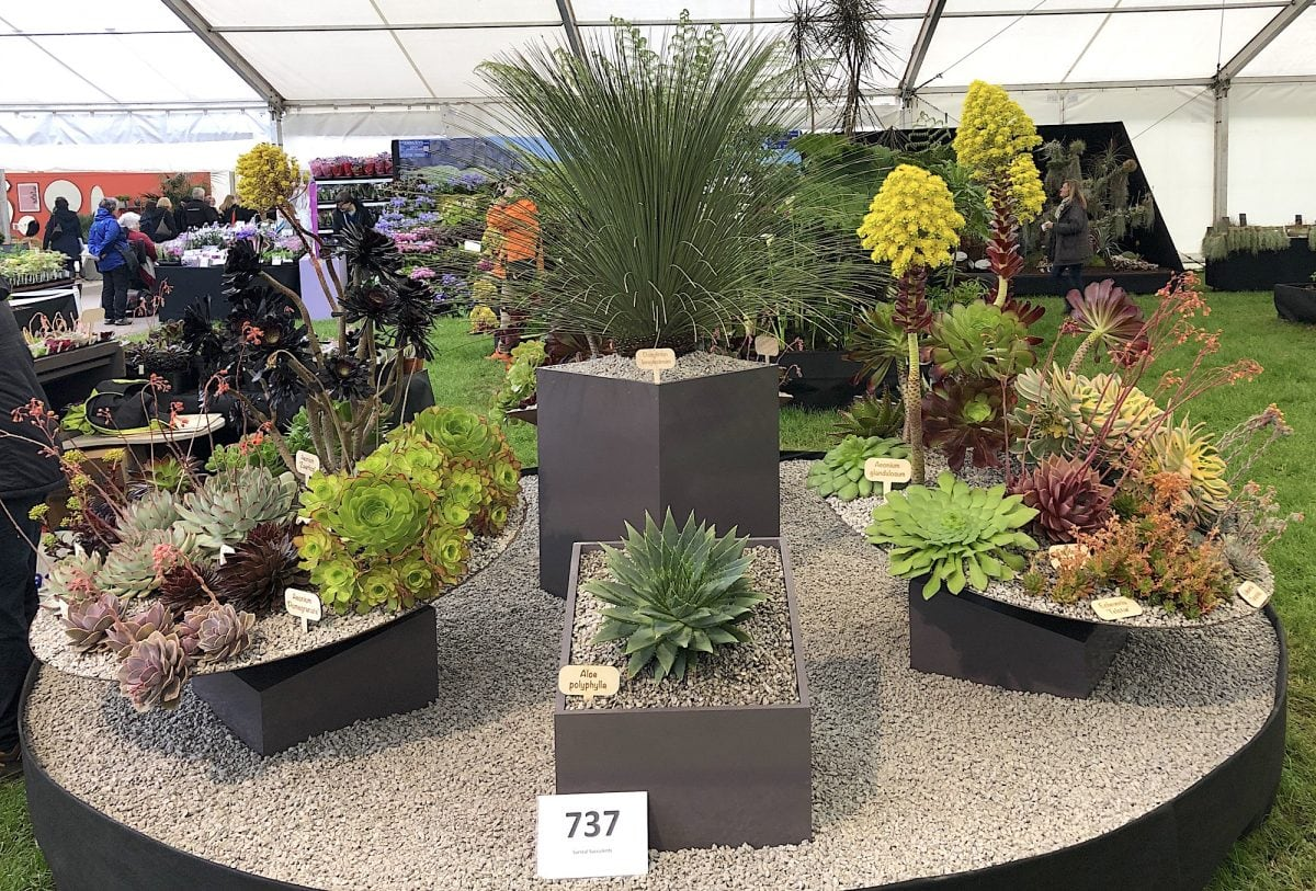 Malvern RHS 2019 04 - Malvern Spring show 9th till 12th of May 2019!