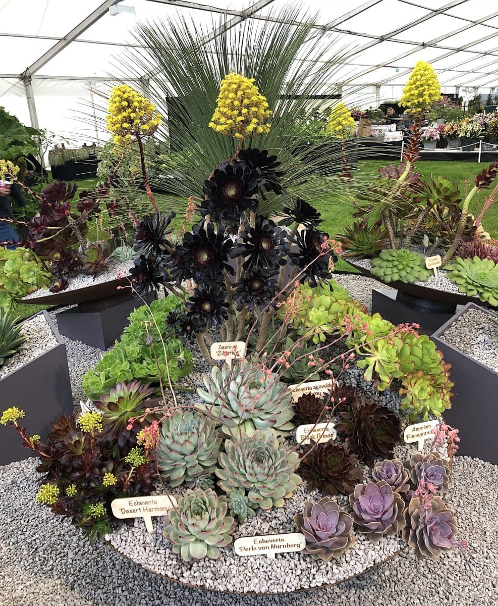 Malvern RHS 2019 05 - Malvern Spring show 9th till 12th of May 2019!