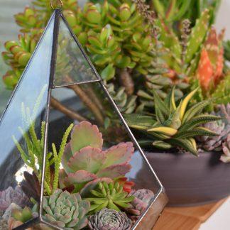 Houseplants Terrarium Windowsill 1 324x324 - Succulent Houseplant Care Guide