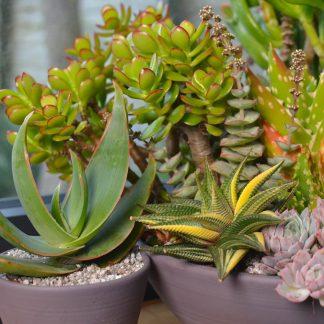 Houseplants Windowsill 1 324x324 - Succulent Houseplant Care Guide