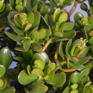 Indoor Succulents 3 324x324 - Succulent Houseplant Care Guide