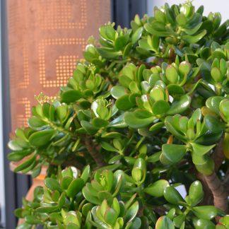 Indoor Succulents 4 324x324 - Succulent Houseplant Care Guide