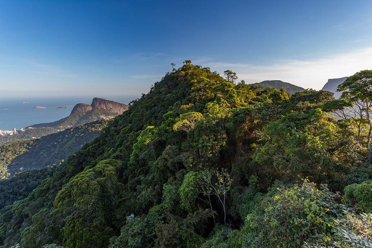 Parque Nacional y Floresta da Tijuca
