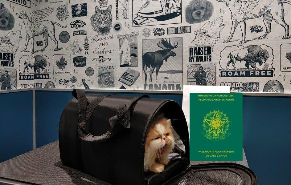 passaporte para cachorros e gatos
