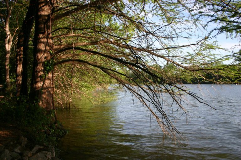 Nourished like a  tree by the river's side