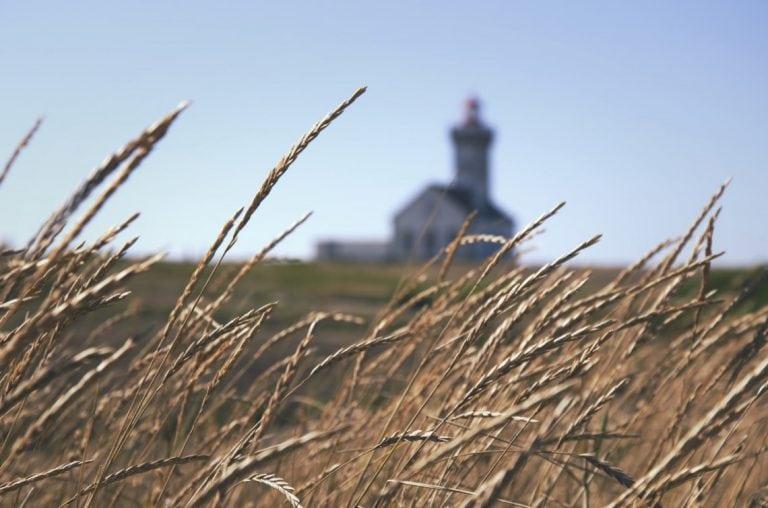 Grain marketing challenges