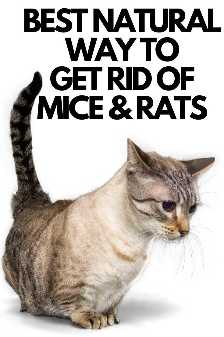 kill mice
