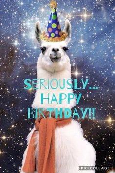 seriously llama birthday