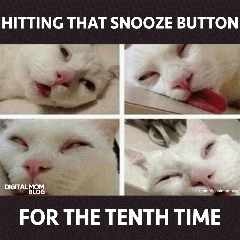 cat meme snooze button good morning