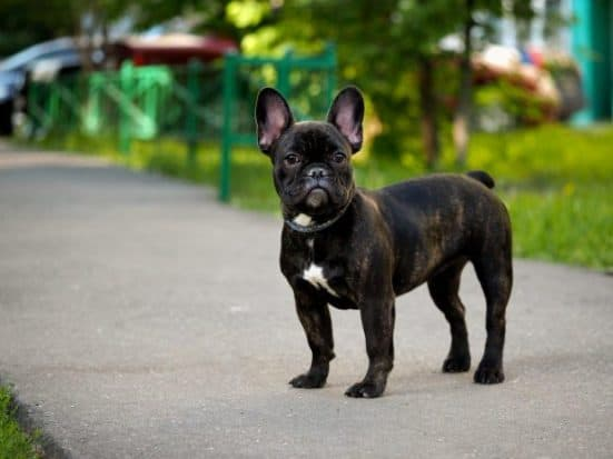 Things to Buy After Adopting a Dog