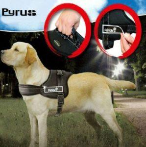 Pyrus K-8 No Pull Heavy Duty Harness
