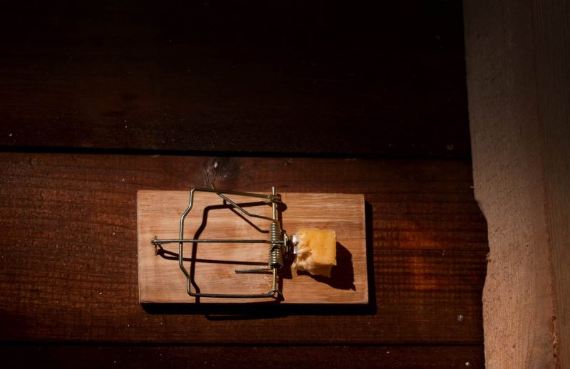 myszy w domu 800x518 - Myszy i szczury w domu: jak je rozpoznać i co robić?