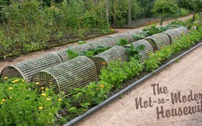 6 Easy Steps for Organic Pest Control