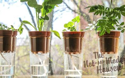 Top 4 Automatic Watering Systems for Potted Plants