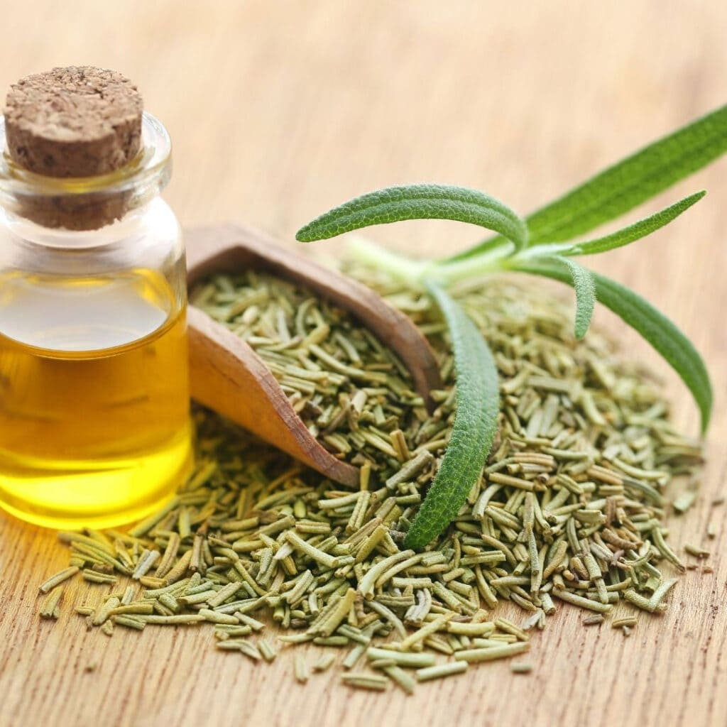 Rosemary oil, dried and fresh rosemary leaves.