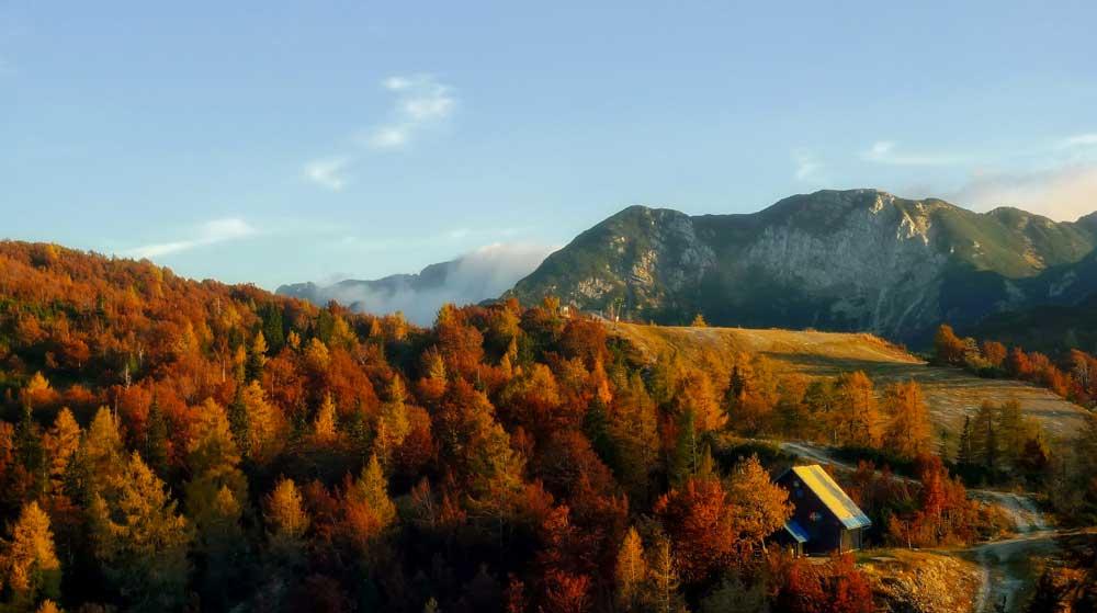 Autumn Fall Colours