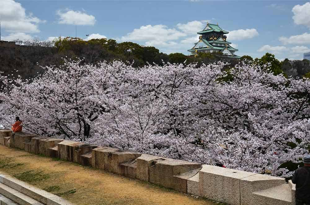 Osaka Castle Cherry Blossoms