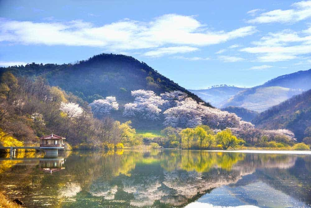 Mountain in Korea in Spring