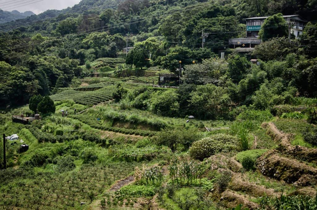 Tea Fields at Maokong