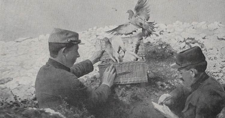 the French army using Carrier pigeons during the war for communication