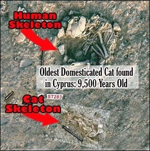 oldest pet cat found in cyprus