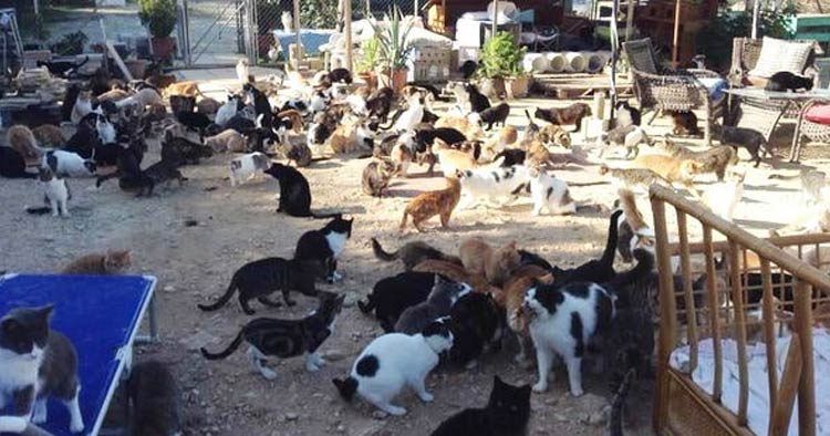 stray cat outnumber citizens cyprus