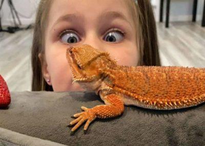 Little Girl Watching Bearded Dragon