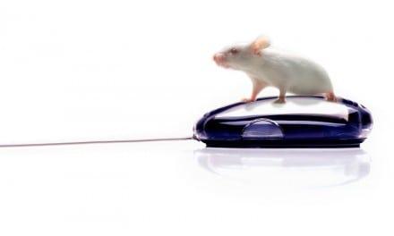 Ratones y humanos unidos por la diabetes
