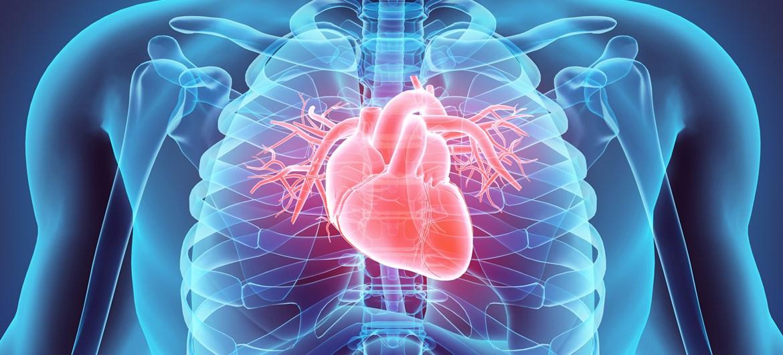 Bir biyoteknoloji şirketi 3D yazıcı ile insan kalbi yaptığını duyurdu