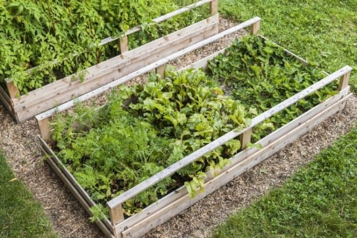 vegetable rotation
