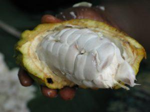 kakaobohnen maillard reaktion