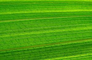 grüne Wiesenlandschaft aus der Luft