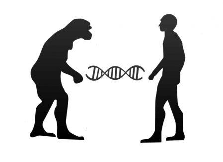 What-Are-Haplogroups-2.jpg