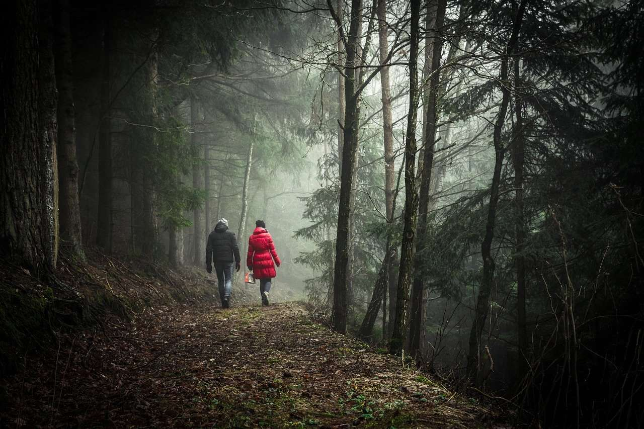 couple forest walk