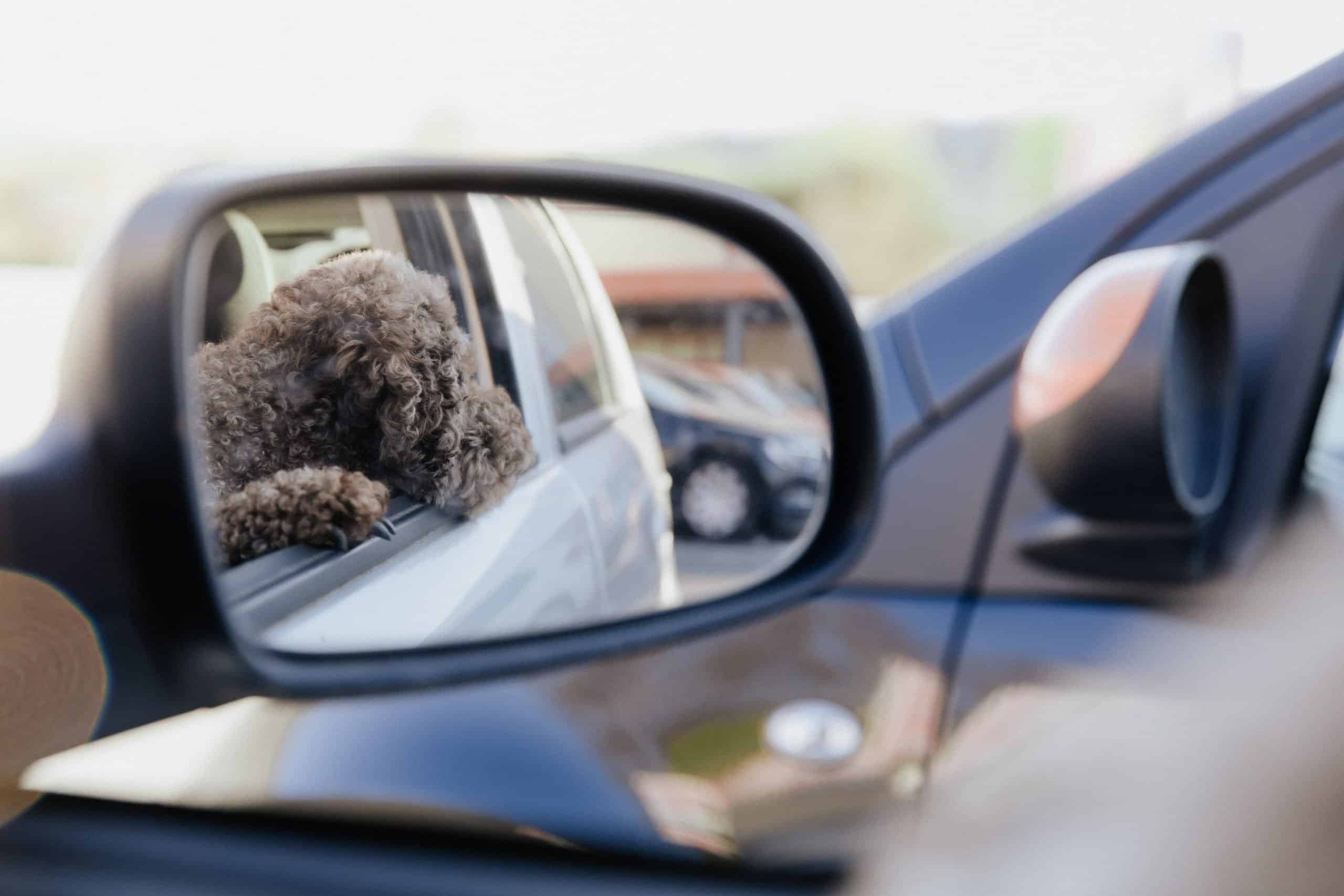 dog left alone in the car