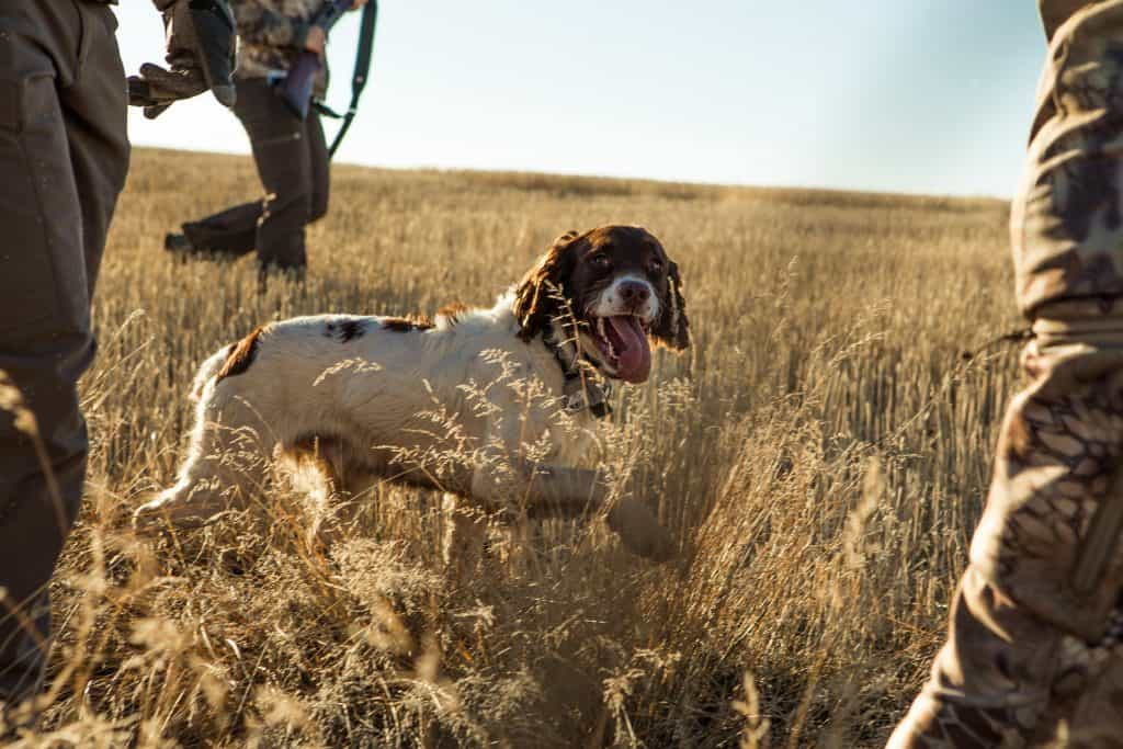 Dog with hunters in the field.