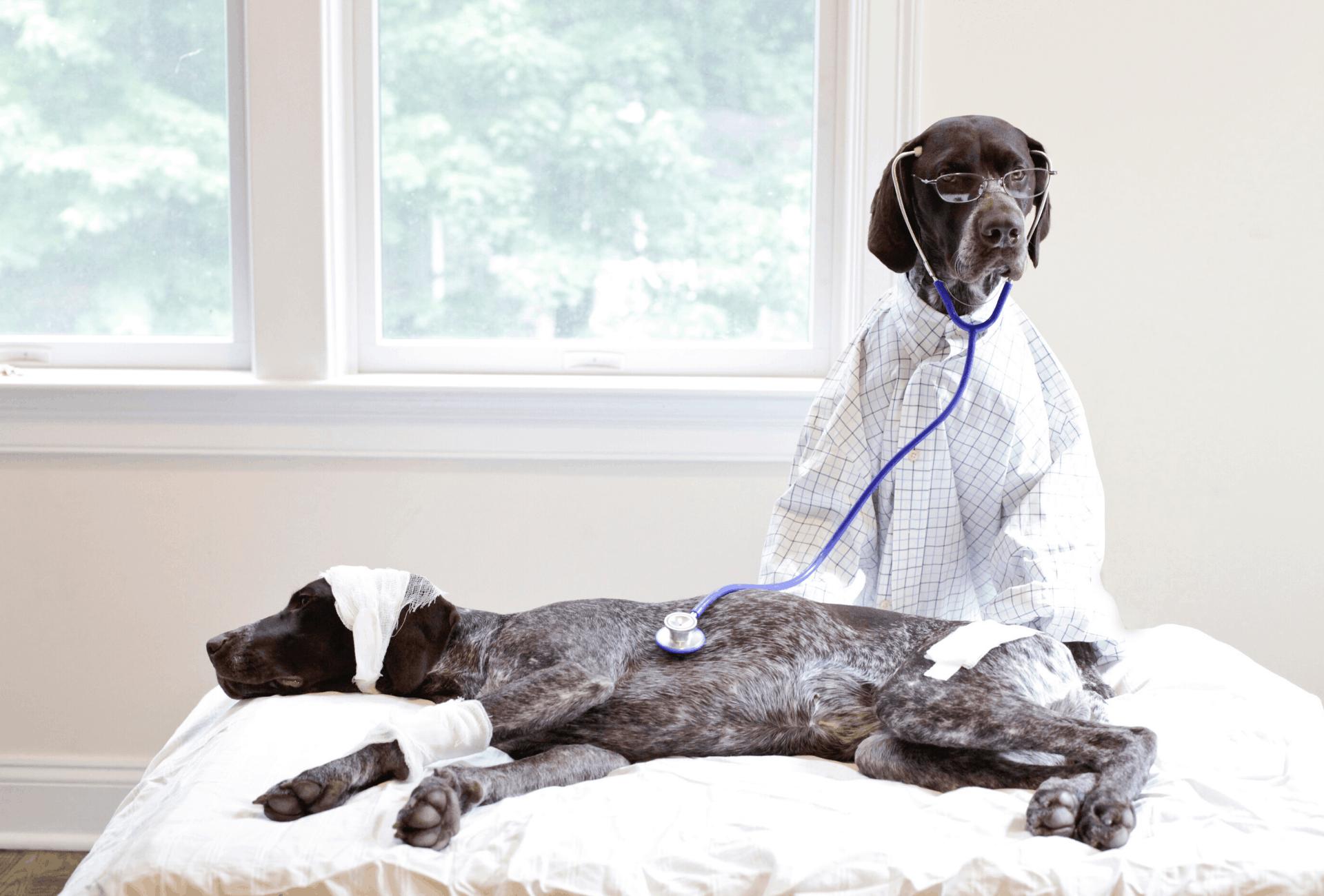 Dog diagnosing another dog.