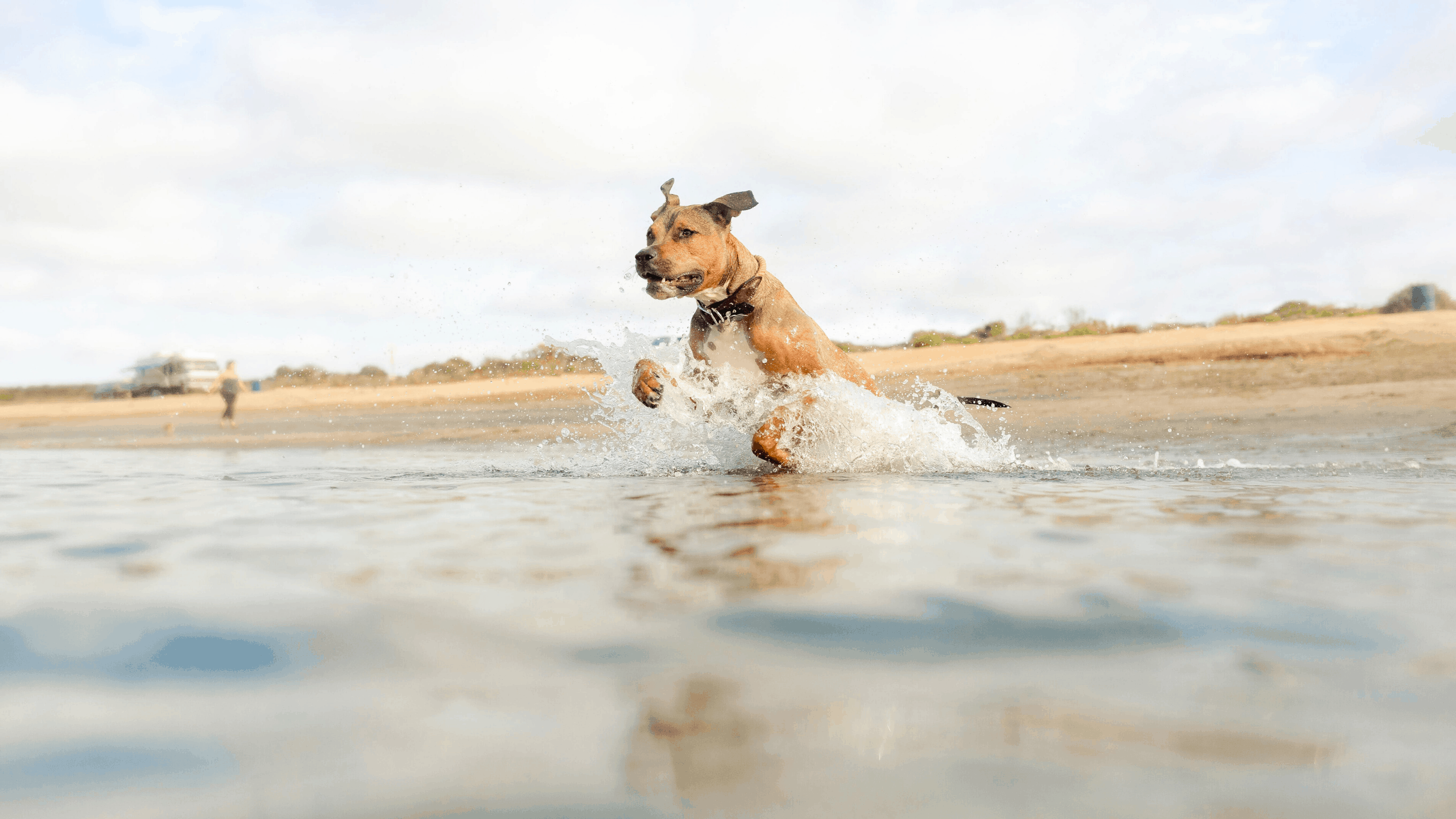 dog jumping into the ocean