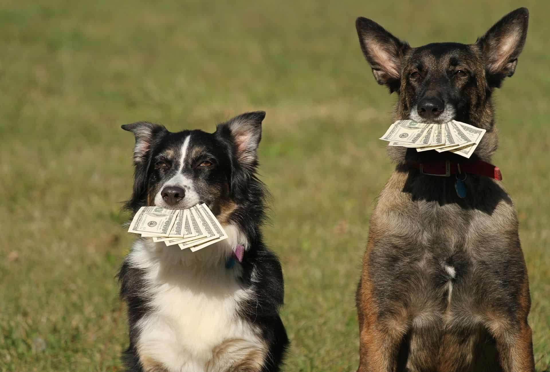 Two adult dogs are holding a couple of dollar bills with their mouth.