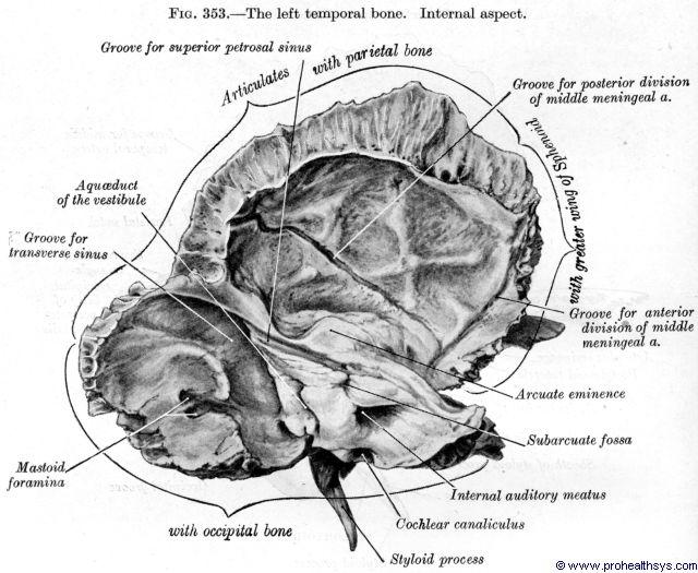 Temporal bone internal view - Figure 353