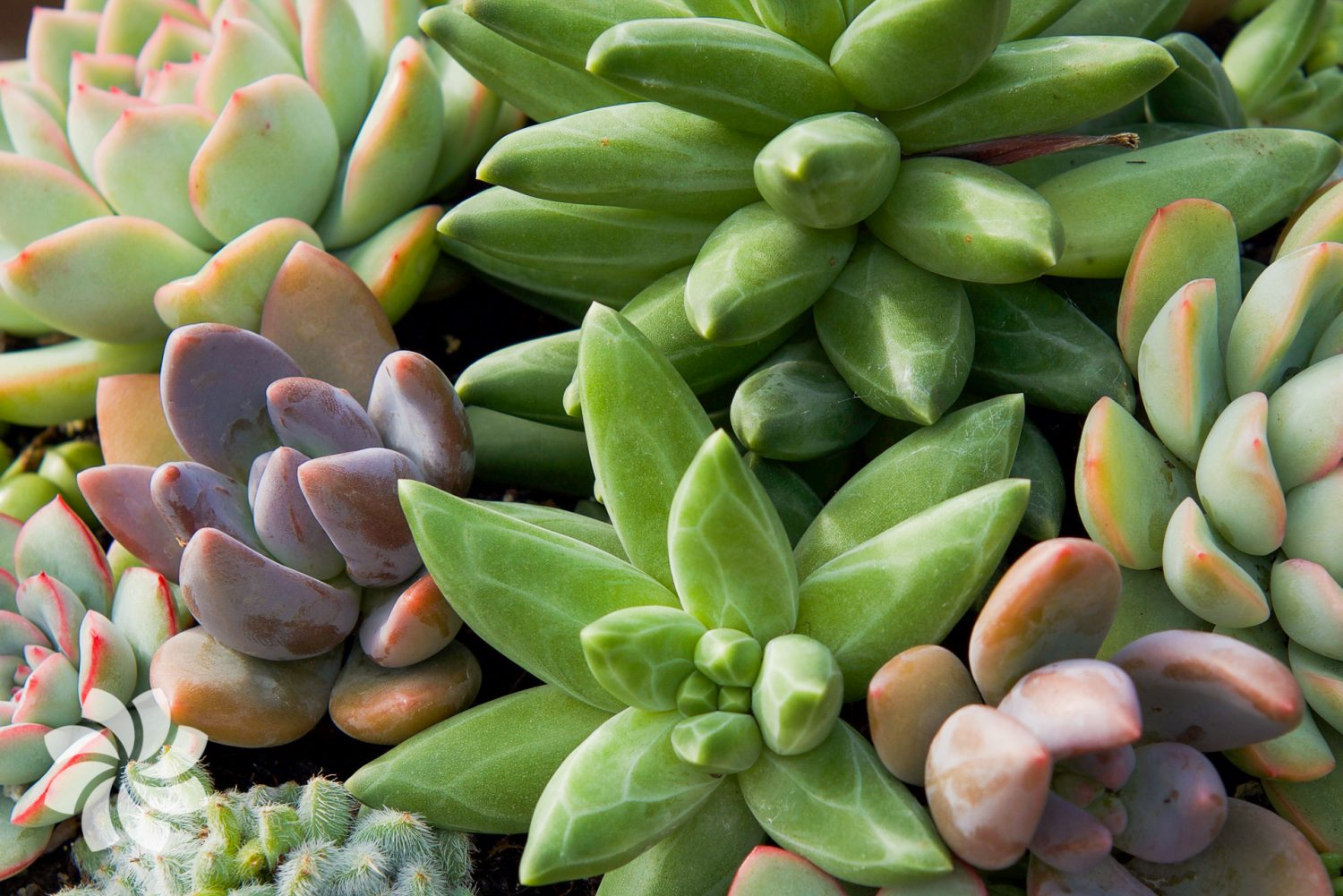 How To Care For Your Succulents Surreal Succulents