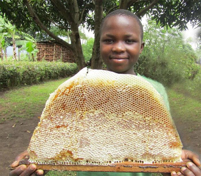 Sytel Sponsors Bees for Development in Uganda